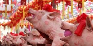 Concorso di bellezza dei Maiali in Cina