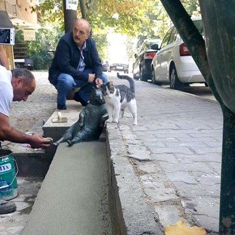 istanbul-cat-2
